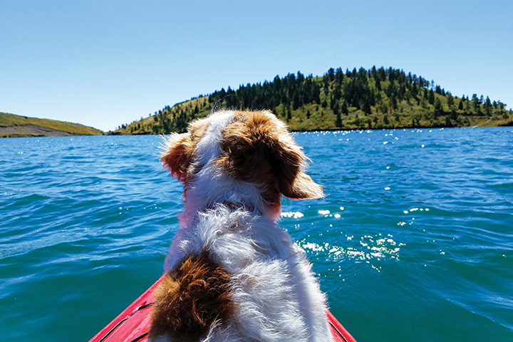 dog on a kayak in a lake depicting water sports