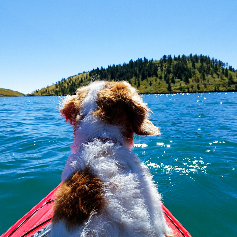 Image of dog in kayak on lake