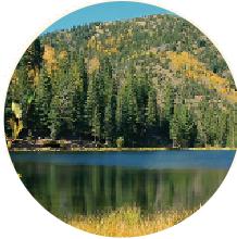 circular image of trees by a lake