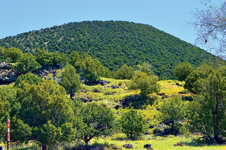 low mountainous picture with deciduous tree in foreground and evergreen trees covering hill in background