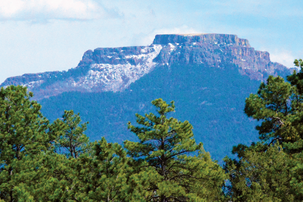Exploring trinidad: a view of Fisher's Peak over the top of evergreen trees
