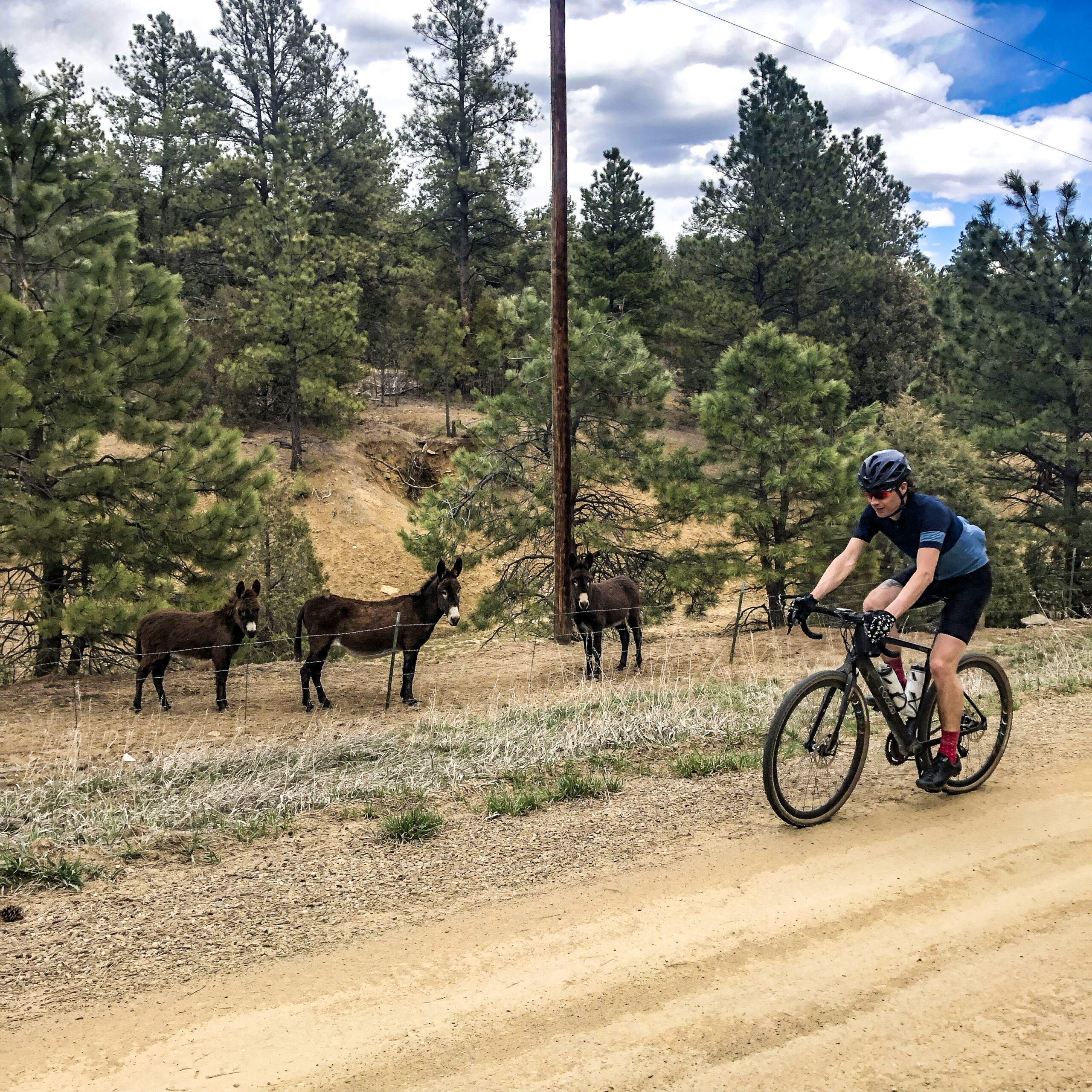 Image of Cyclist riding past donkeys